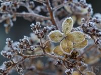 A.S-E. Färg 2 Frostig hortensia