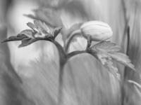 AV svartvitt 3