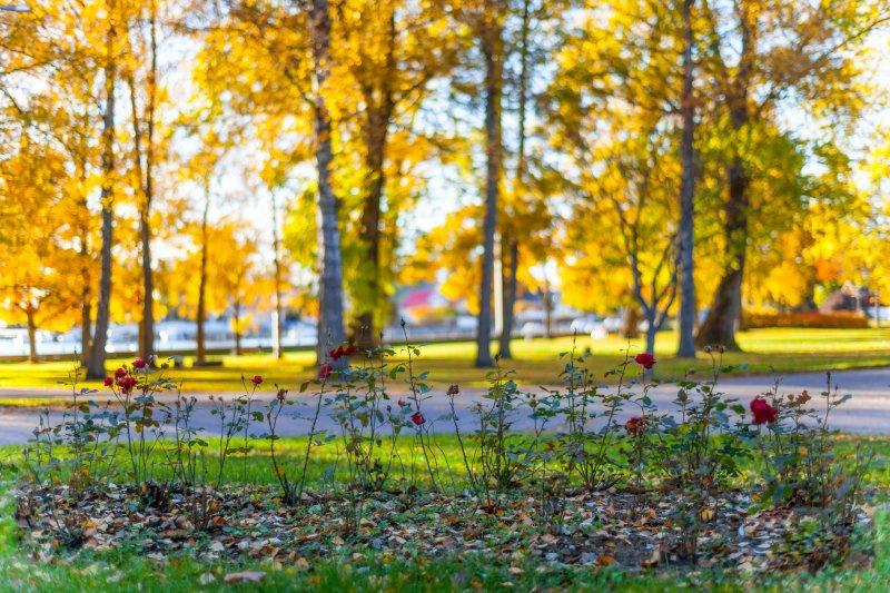 Ekenäs-Skepparträdgården