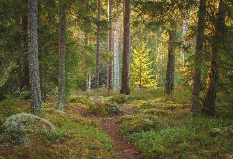 Västerby skogen. Foto Anita Valtonen